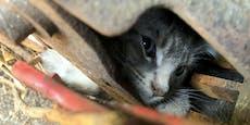 Dramatischer Unfall - Kätzchen geriet in Häcksler