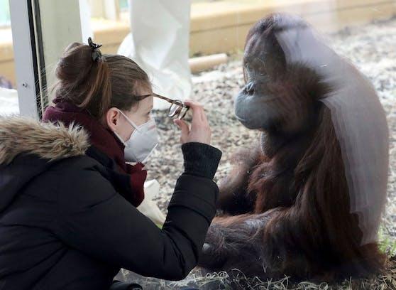 Einen Monat nach Beginn der Osterruhe dürfen auch die Wiener Zoos ihre Tore wieder aufsperren - allerdings mit nur unter bestimmten Bedingungen.