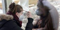 Zoos und Museen sperren am Montag wieder auf