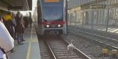 Schwan watschelt über Gleise und blockiert Wiener U6