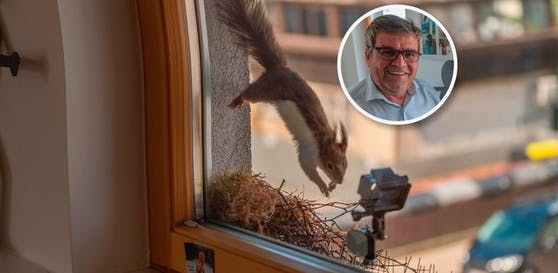 """Eichhörnchen """"Lucy"""" arbeitet jetzt bei Marchtrenks Bürgermeister Paul Mahr."""