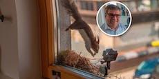 """Dieses Eichhörnchen """"arbeitet"""" beim Bürgermeister"""
