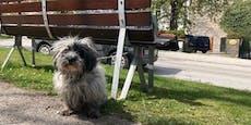 Herzlos! Hund an Parkbank angebunden zurück gelassen