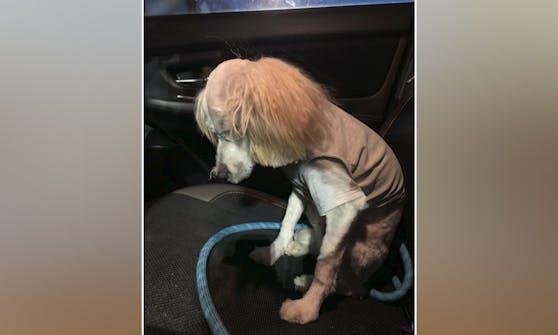 """Der ehemalige Fluffi """"Bear"""" schämt sich richtig für seinen neuen Haarschnitt."""