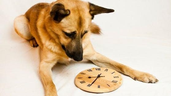 Wissen unsere Hunde wie lange wir tatsächlich weg sind?