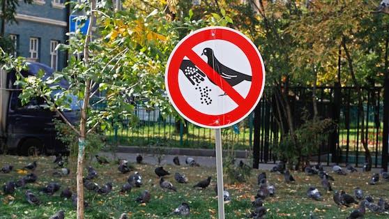 Eine Dame aus Frankenthal landete beinahe im Gefängnis, weil sie die Vögel fütterte.