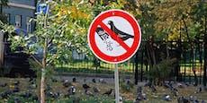 Frau landet fast im Gefängnis, weil sie Vögel füttert