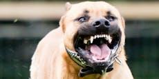 Mädchen (7) vor Augen ihrer Mama von Hunden totgebissen