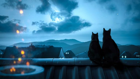 Bei Freigänger-Katzen konnte man teilweise ungewöhnliches Verhalten zu Vollmond feststellen.