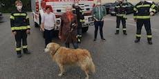 Feuerwehr fischte Hund aus der Schwarza