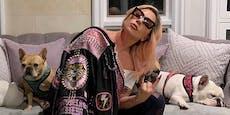 Fünf Festnahmen nach Raub von Lady Gagas Hunden