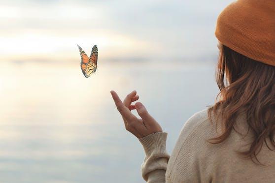 Schmetterlinge kehren auch in dein Leben zurück, wenn du folgende Tipps beachtest.