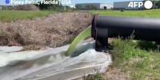 Florida droht riesige Umweltkatastrophe