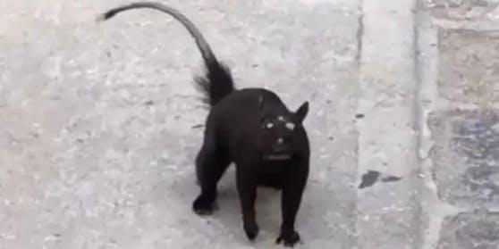 Mutierte Ratte mit drei Augen? Diese Kreatur sorgt bei Millionen für Aufregung!