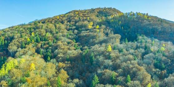 Österreich ist eines der grünsten Länder der Welt (im Bild: Bergwald über dem Ortszentrum von Elsbethen (Salzburg)).