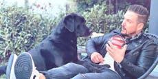 TV-Star geschockt: Sein Hund lag auf Intensivstation