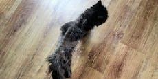 """Haut und Knochen - so geht es Katze """"Oma Miri"""" heute"""