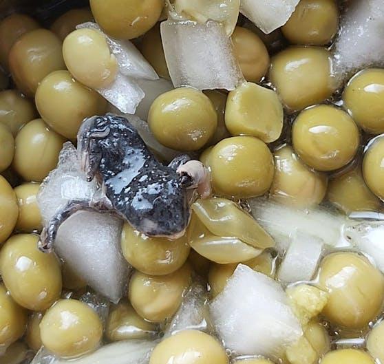 Ein Leser fand einen Frosch in seinem Salat.