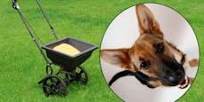 Ist Rasendünger giftig für meinen Hund?