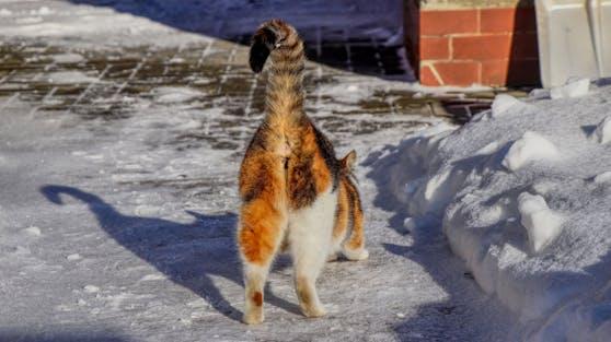 Katzenhalter kennen es alle. Beim Kraulen der Samtpfote recken sie uns gerne den Popo ins Gesicht.