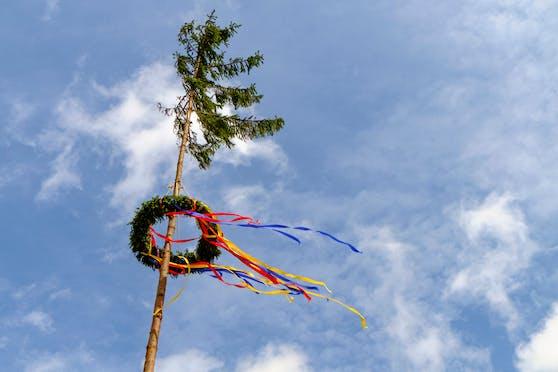 Der Maibaum wurde von Unbekannten umgeschnitten.
