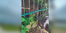 Hund Leni erschnüffelt verirrten Biber auf Spielplatz