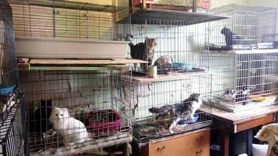In Hasenkäfigen waren insgesamt neun Katzen in einem Zimmer aufgestapelt.