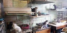 15 Jahre Tierhalteverbot für Tiermessis