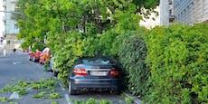 Baum kracht nach Sturmböe in Wien-Alsergrund auf Autos