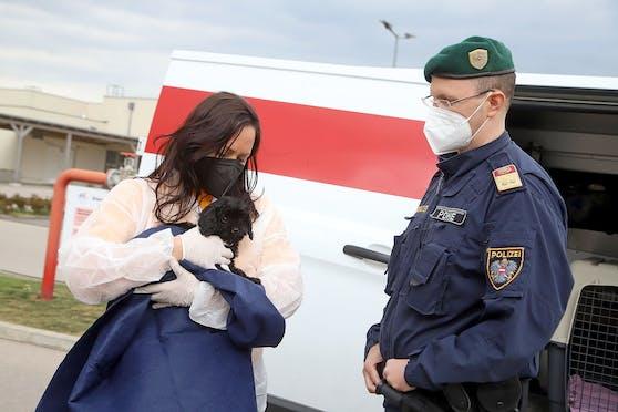 """Hinter Online-Welpenkäufen steht oft großes Tierleid. Daher führen die Stadt und die Polizei Wien derzeit eine """"Aktion Scharf gegen den illegalen Welpenhandel durch."""
