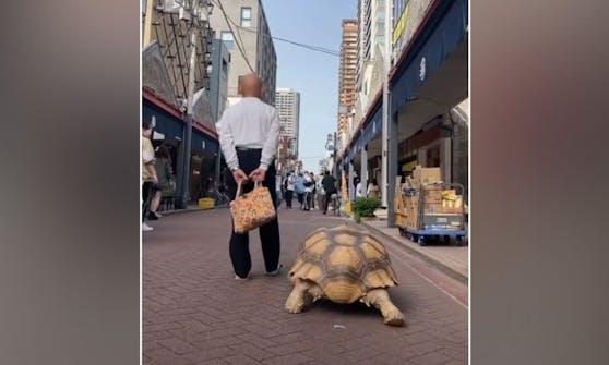 """Herrchen Mitani Hisao geht seine Riesenschildkröte täglich """"äußerln""""."""