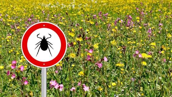 Sommerzeit bedeutet auch Zeckenzeit. Was du alles über die Spinnentiere wissen musst, erfährst du hier.