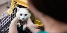 53-Jähriger schmiss Transportbox samt Katze in den See