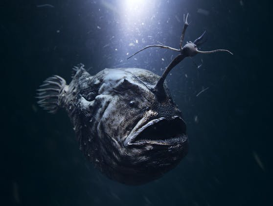 Gruselig! In 3.000 Metern Tiefe ist dieser Fisch von menschlichen Blicken verborgen.