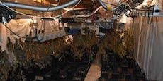 Polizei entdeckt riesige Cannabis-Plantage in Wien