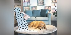 Rührend! IKEA beherbergt Straßenhunde aus Sizilien