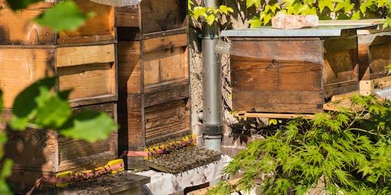 Unbekannte haben im Bezirk Weiz (ST) die Öffnungen eines Bienenstocks mit Schaumstoff verklebt (Symbolfoto).