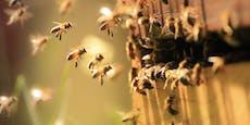 Tausende Bienen tot – Polizei fahndet nach Tierquäler
