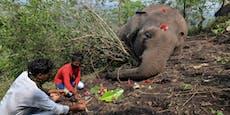 Mindestens 18 Elefanten durch Blitzschläge getötet