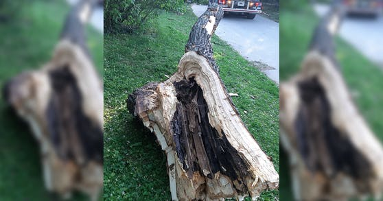 Dieser Baum fiel in einem Park auf zwei Wienerinnen.