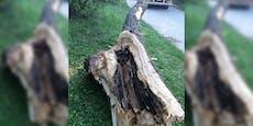Wienerin (31) von morschem Baum beinahe erschlagen