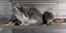 Rekord in Wien! 11 Kaninchen in vier Tagen ausgesetzt