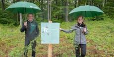 Ministerin will den Schutz heimischer Wälder stärken