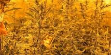 Polizei entdeckt zufällig Cannabis-Plantage in Wien