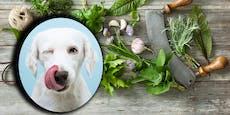 Kräuterkunde für den Hund - Was ist giftig, was gesund?