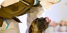 Corona-Spürhunde erschnüffeln Infizierte zu 97 Prozent