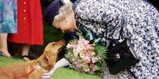Queen trauert erneut: Hund Fergus stirbt mit 5 Monaten