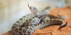 Kundin findet lebende Schlange im Brokkoli