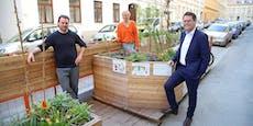 Im Grünen chillen: Saisonstart für Wiener Grätzloasen