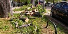 124-km/h-Sturm verursachte Schaden in Millionen-Höhe
